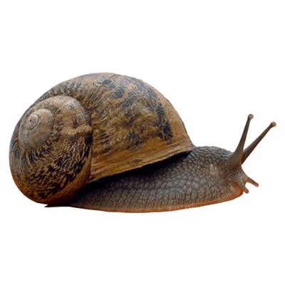 Переваги розведення равликів