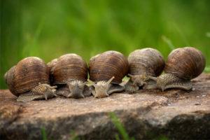 Міфи про равликів