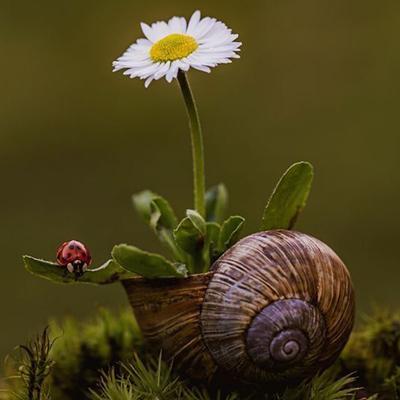 Розведення равликів в природному середовищі існування