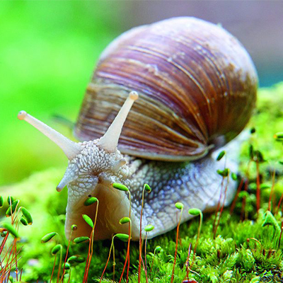 Равлики завойовують нішу в тваринництві