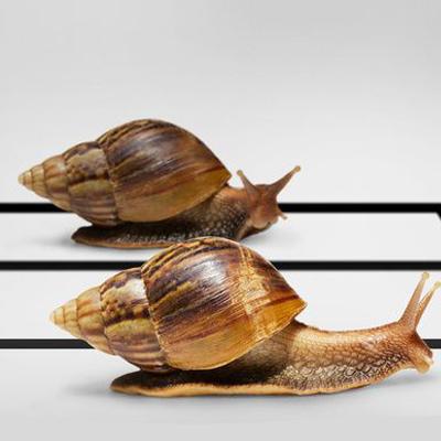 Чому равлики повільно пересуваються.