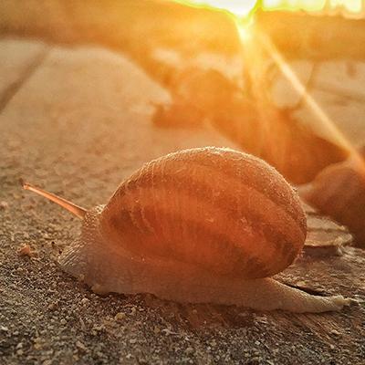 З чого варто починати розведення равликів