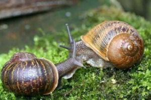 Цікаві факти про равликів