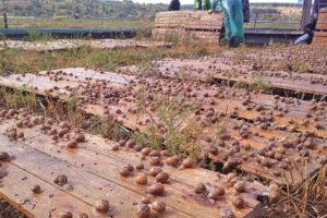 Что нового можно узнать во время экскурсии на ферму улиток